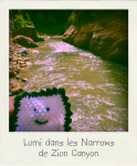 Lumi dans les Narrows de Zion Canyon